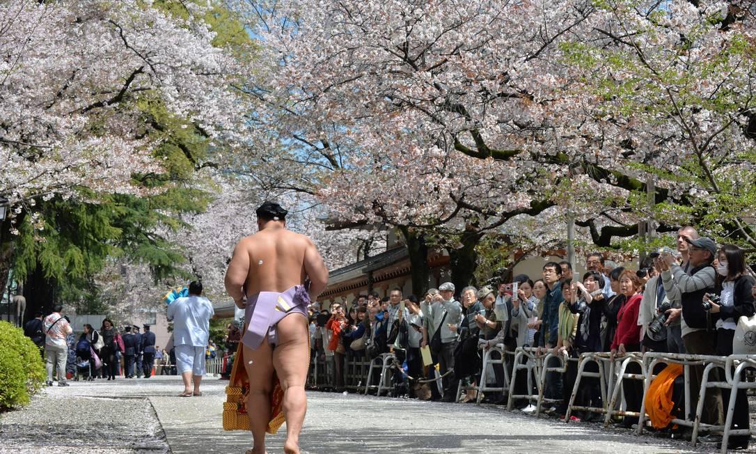 Lutador de sumô caminha sob as cerejeiras em flor numa exibição do esporte no templo Yasukuni em Tóquio KAZUHIRO NOGI / AFP