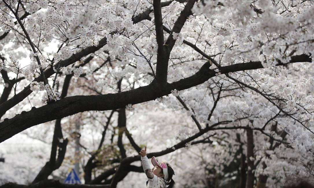 Menina passeia entre as cerejeiras em um parque em Yeouido, uma ilha no Rio Han, em Seoulm na Coreia KIM HONG-JI / REUTERS