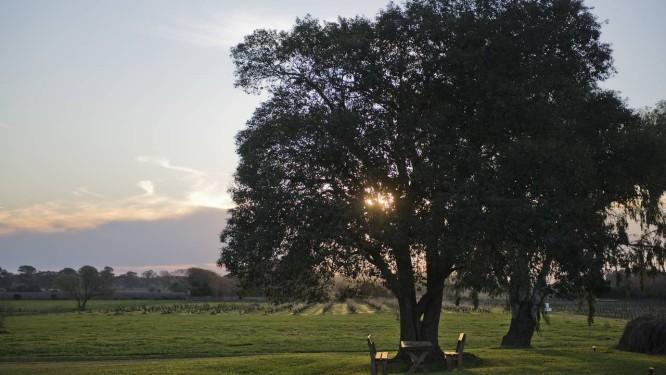 Pôr do sol visto por entre os galhos de uma árvore na Posada CampoTinto Foto: Matilde Campodonico / The New York Times