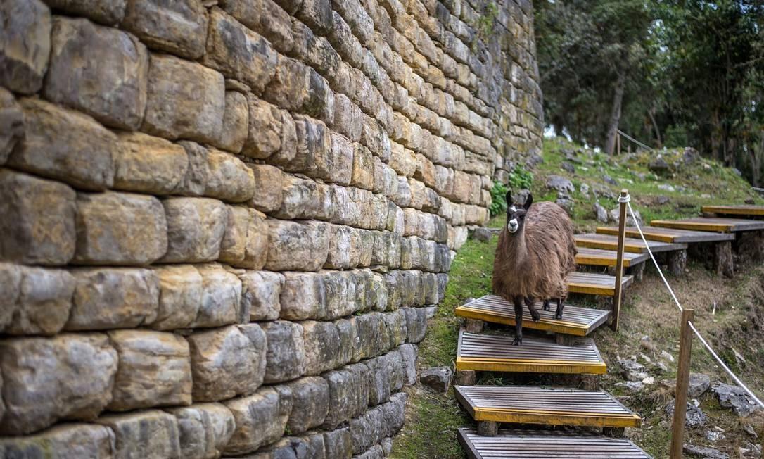 Uma lhama desce as escadas em Kuéla, cidadela fortificada erguida no norte do Peru, no século XI Foto: ERNESTO BENAVIDES / AFP
