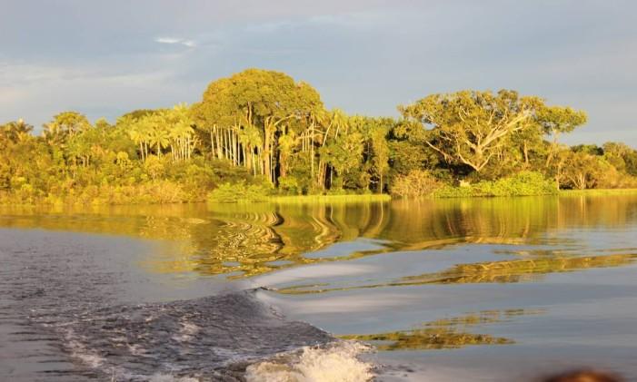 Floresta Amazônica Foto: Léa Cristina/Agência O Globo