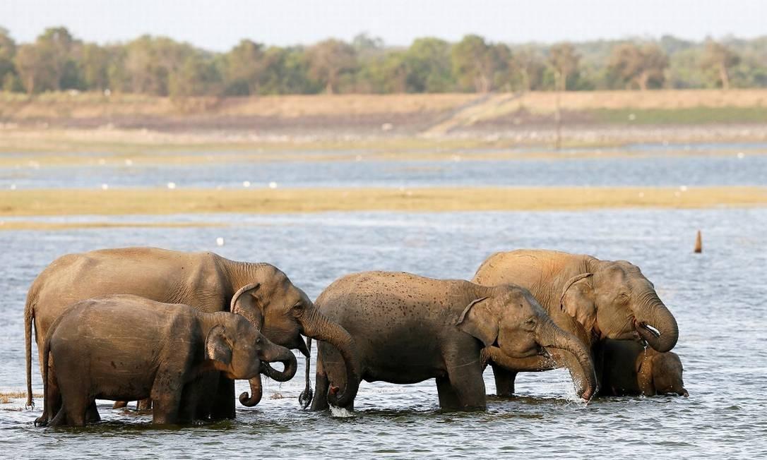 Uma manada de elefantes se banha em um lago do Kaudulla National Park, em Habarana, no Sri Lanka Foto: DINUKA LIYANAWATTE / REUTERS