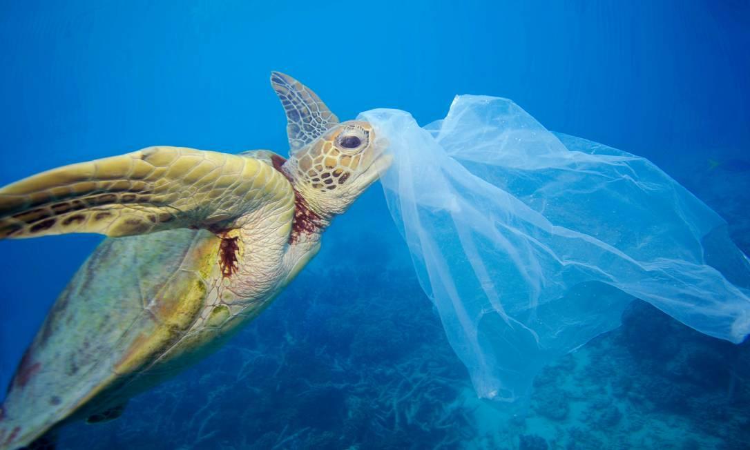 Tartaruga marinha nada com um saco plástico na Grande Barreira de Corais, na Austrália Foto: Troy Mayne / WWF