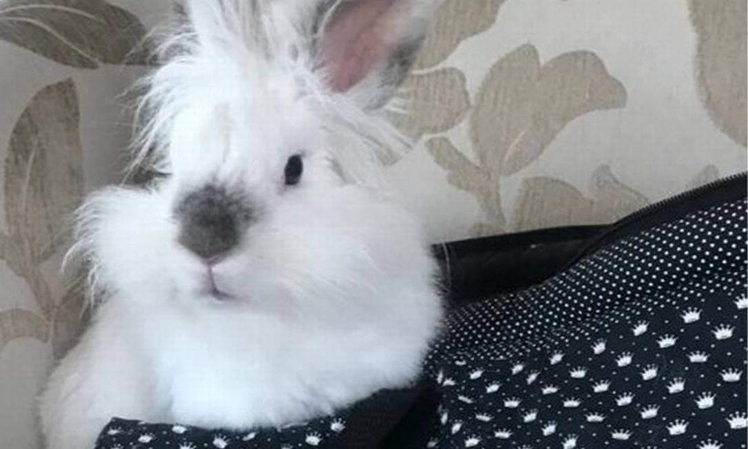 Justiça de MG autorizou viagem de coelho em voo Foto: Reprodução/TJMG
