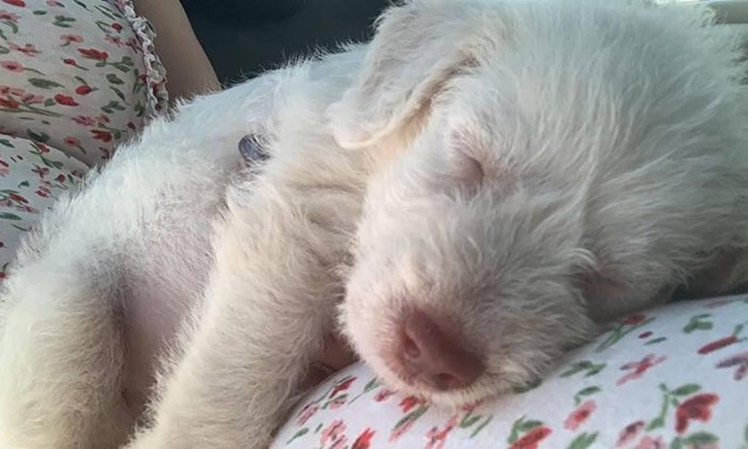 Enem, o cachorrinho adotado por Alana Foto: Acervo pessoal