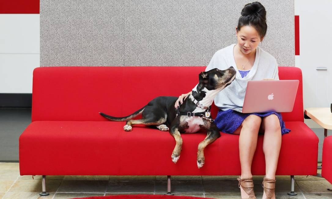 Como no Googleplex, sede da companhia em Mountain View, os funcionários têm autorização para levar seus animais de estimação para o escritório Foto: Divulgação