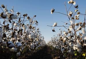 A agropecuária subiu puxada pelos cultivos de algodão e milho Foto: Ty Wright / Bloomberg News - 09/10/2013