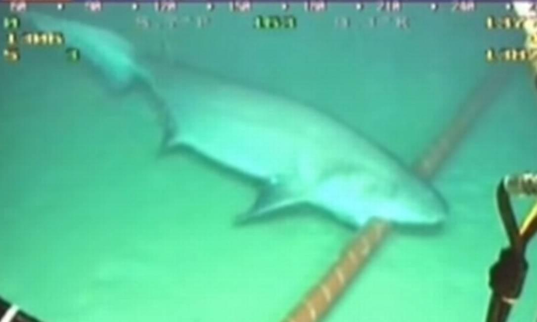 Flagrante de ataque de tubarão a cabo submarino, arquivado em 2010 no YouTube Foto: Reprodução
