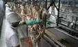 China autoriza importação de carnes de 17 novas plantas frigoríficas brasileiras Foto: Diego Giudice / Bloomberg