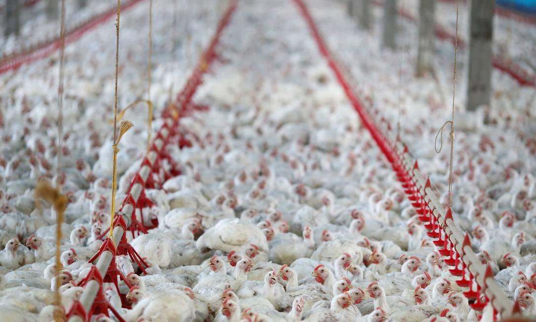 Carga de asas de frango que chegou a Shenzhen, no sul do país asiático, foi confiscada Foto: Rodolfo Buhrer / Reuters
