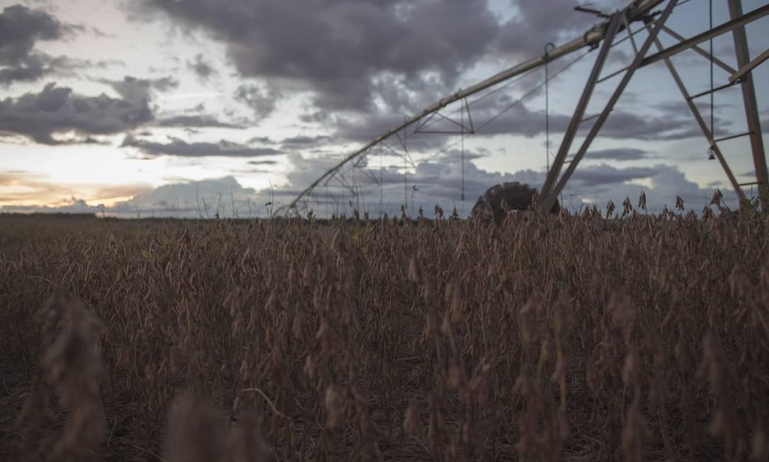 Colheita de soja em fazenda de Barreiras, na Bahia. Foto: Daniel Marenco / Agência O Globo