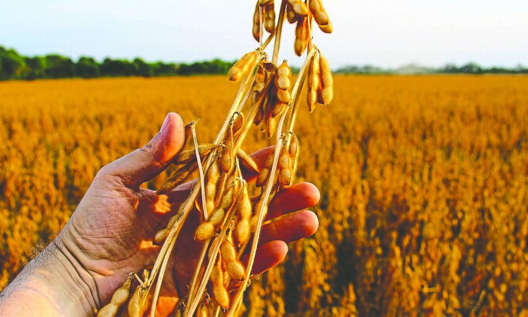 COFCO International foi responsável por 9% das exportações de soja do Brasil em 2018 Foto: Banco de Imagens