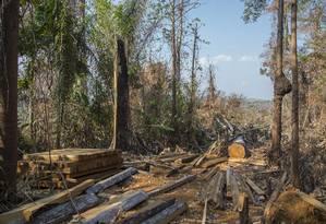 Desmatamento no Estado do Pará, no município de Altamira Foto: Edilson Dantas / Agência O Globo