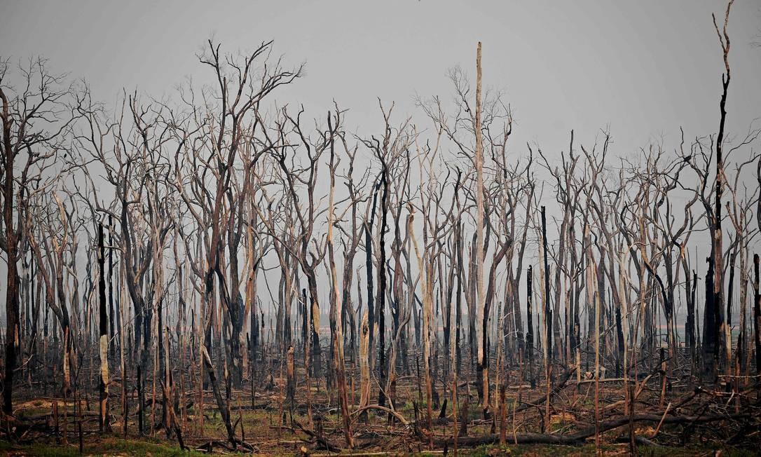 Área da Floresta Amazônica queimada: para europeus e americanos, o Brasil falha em proteger natureza Foto: Carl de Souza / AFP