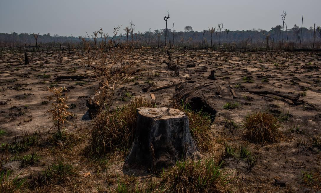 """Gestores solicitaram reunião virtual com embaixadores do Brasil. Eles manifestam preocupação com o """"desmantelamento de políticas ambientais"""" e o efeito sobre a imagem das empresas Foto: Victor Moriyama / NYT"""