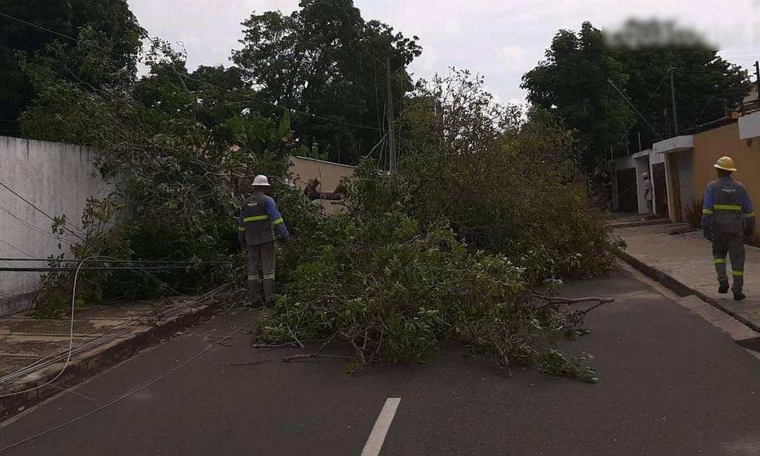 Segundo a Equatorial, mais de 280 árvores na fiação em Teresina Foto: Divulgação