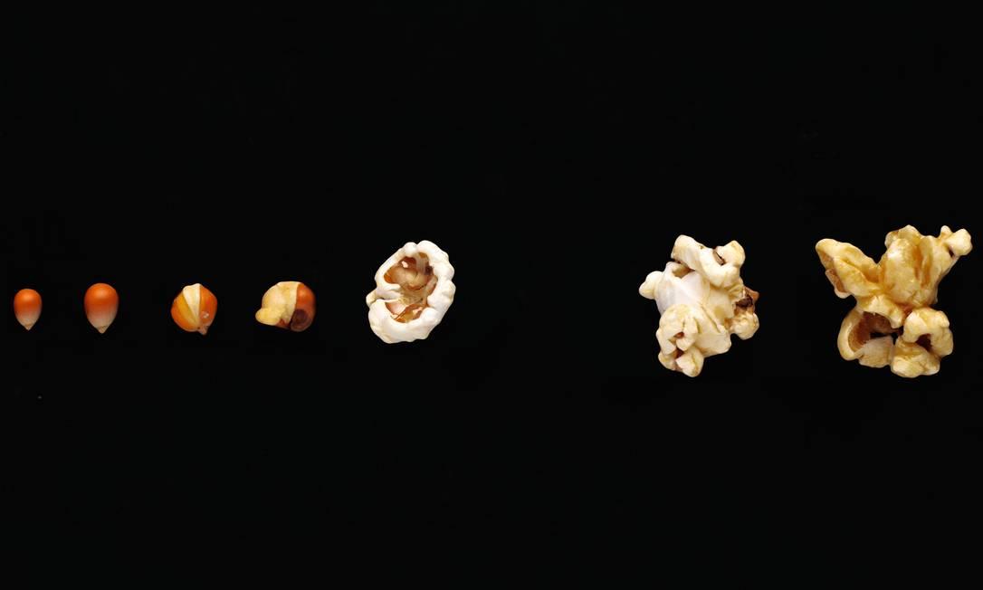 Como o milho vira pipoca é fácil de entender. Como o homem se tornou o que é, não. Foto: Getty Images / EyeEm