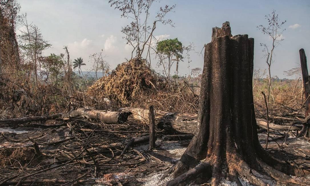 Um trecho de 3.730 hectares de floresta — equivalentes a 23 parques Ibirapuera ou 31 aterros do Flamengo — desapareceu. Foto: Edilson Dantas / Agência O Globo