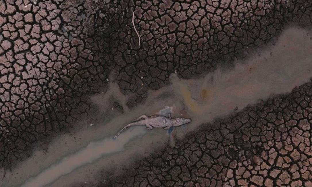 Uma área equivalente ao tamanho de cinco Distritos Federais queimou só neste ano no bioma. É um aumento de 213% em relação ao mesmo período de 2019. Foto: Mauro Pimentel / AFP