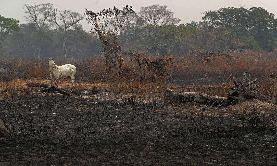 A Polícia Federal suspeita que as queimadas foram impulsionadas por ações criminosas de fazendeiros. Foto: Amanda Perobelli / Reuters