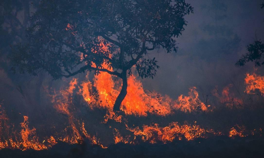 O candidato democrata Joe Biden ameaçou, se eleito, impor sansões econômicas ao Brasil caso não seja retomada uma política ambiental de proteção aos biomas como a Amazônia e o Pantanal. Foto: Araquém Alcântara