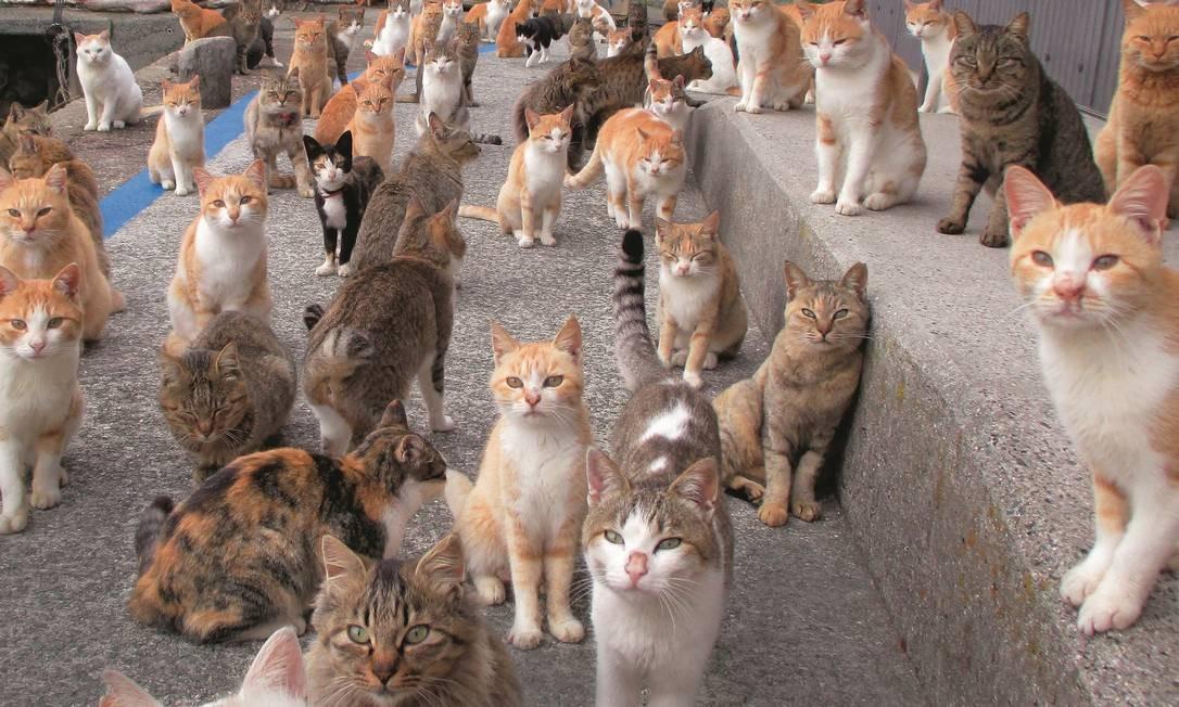 Para o inglês John Gray, o mais intrigante não são as características que os gatos têm em comum, mas as diferenças entre eles. Foto: Kazuyuki Ono / AFP