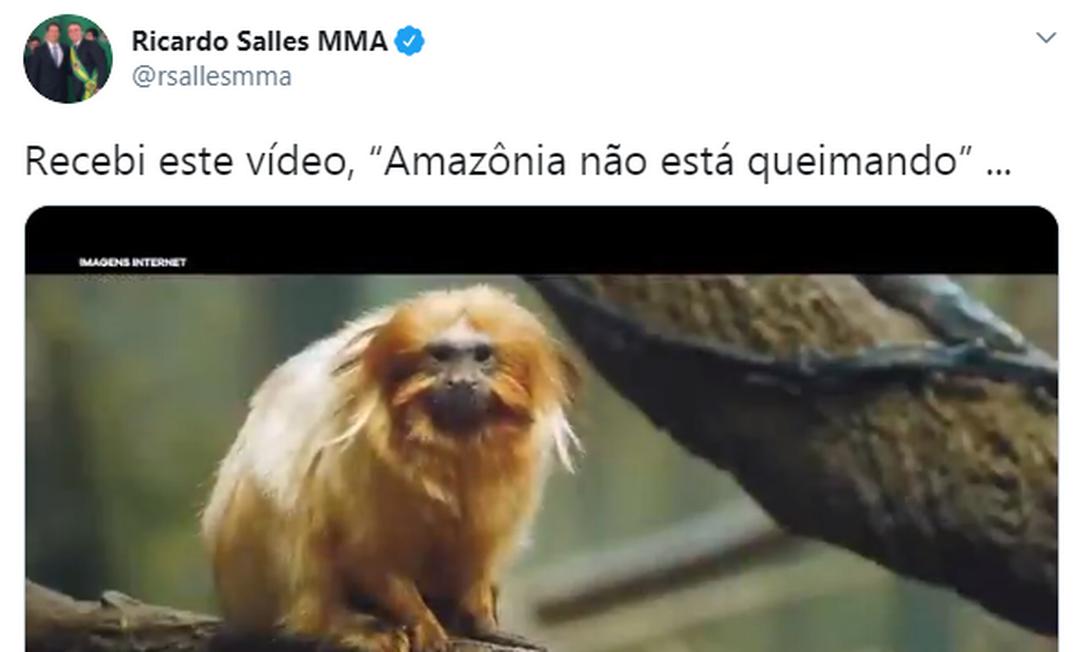 Vídeo de Salles sobre Amazônia com imagens da Mata Atlântica Foto: Reprodução