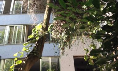 Amendoeira é retirada no Alto Leblon Foto: Foto enviada pela leitora Sandra Pinto para o WhatsApp do GLOBO / Eu-Repórter