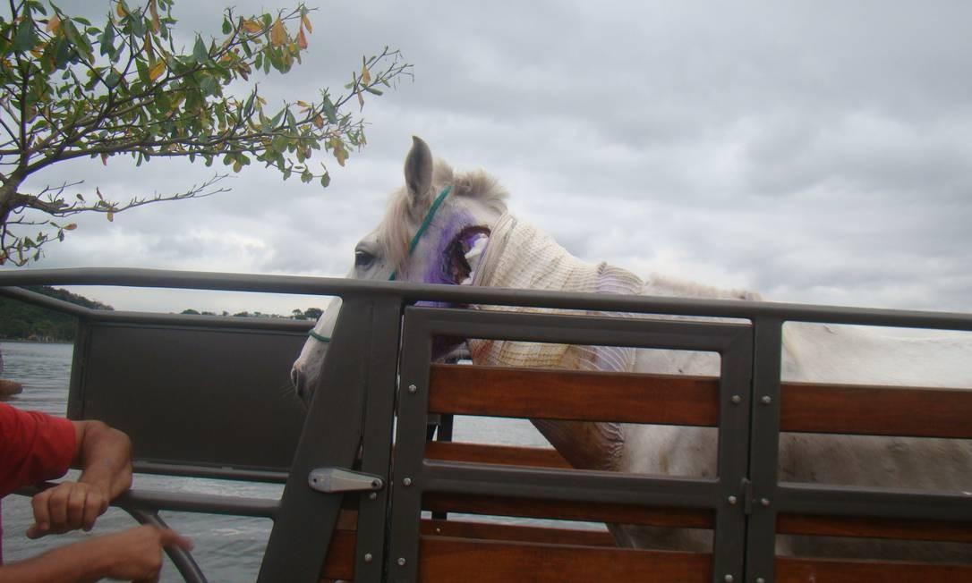 Cavalo utilizado por charreteiro de Paquetá é recolhido Foto: Divulgação