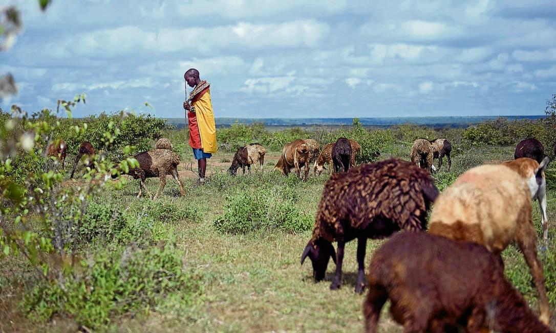 Jovem cuida de ovelhas em Nairóbi: mudanças climáticas anulam ganhos do combate à desnutrição Foto: Tony Karumba/AFP