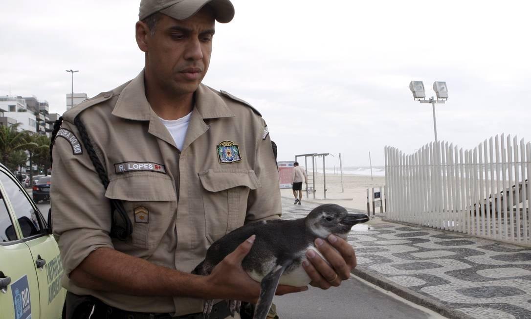 Pinguim foi encontrado na Praia do Leblon e levado para Centro de Recuperação Foto: Gustavo Stephan / Agência O Globo