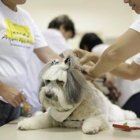 Cadela Bibiah, do Projeto Pêlo Próximo, é penteada por pacientes Foto: Fábio Seixo / O Globo