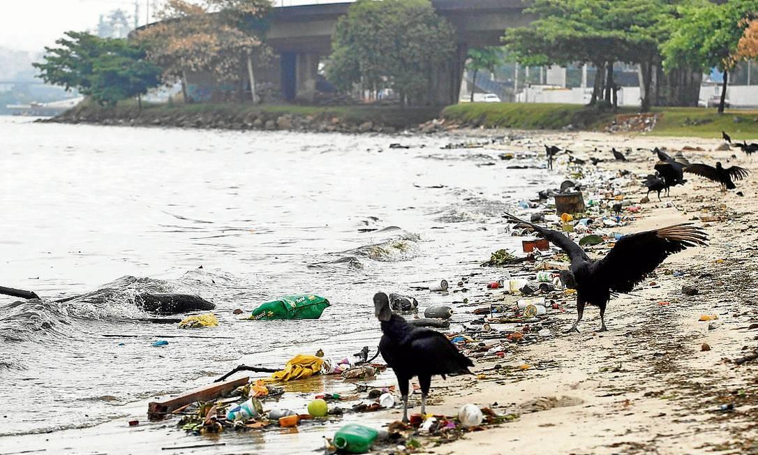 Lixo e urubus na Praia do Galeão, que praticamente não tem mais faixa de areia, denunciam o abandono do local Foto: Marcelo Carnaval / Agência O Globo