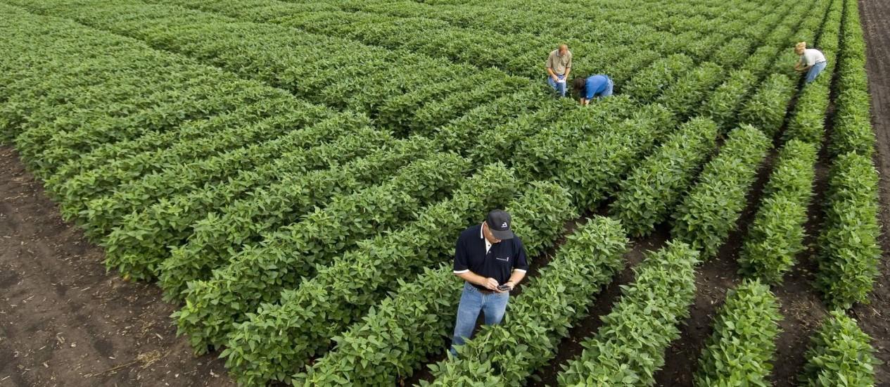 Pesquisadores da empresa de biotecnologia Monsanto em campo de experiências com soja nos EUA: empresa desenvolveu tecnologia do gene exterminador que é alvo de moratória em todo mundo Foto: NYT
