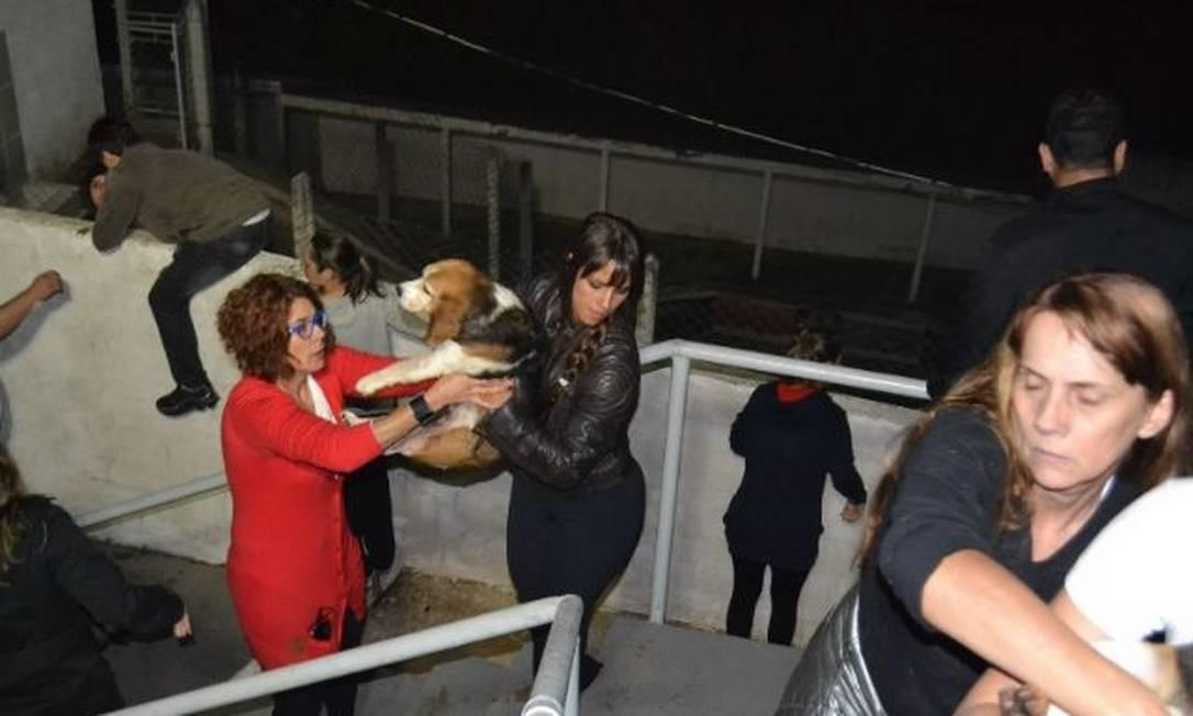 Os ativistas retiraram de lá 178 cães da raça Beagle usados em testes para indústria farmacêutica Foto: Alessandro Costa/ São Roque Notícias