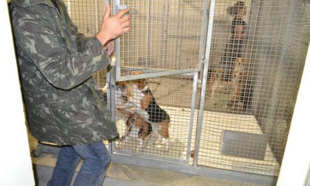 Segundo os ativistas, os animais sofriam maus-tratos Foto: Alessandro Costa/ São Roque Notícias