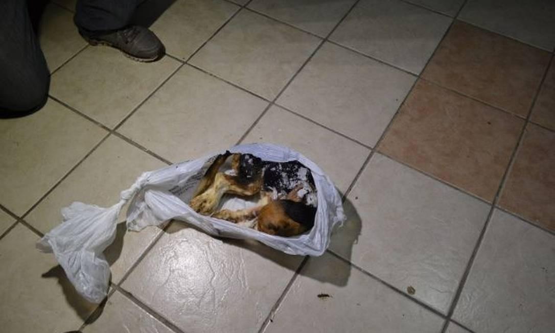 Um cão foi encontrado morto Alessandro Costa/ São Roque Notícias