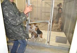 Ativistas levaram animais usados em testes no Instituto Royal Foto: Alessandro Costa/ São Roque Notícias