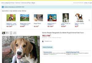 Beagle supostamente retirado do Instituto Royal é anunciado na internet. Foto: Foto: Divulgação/Instituto Royal