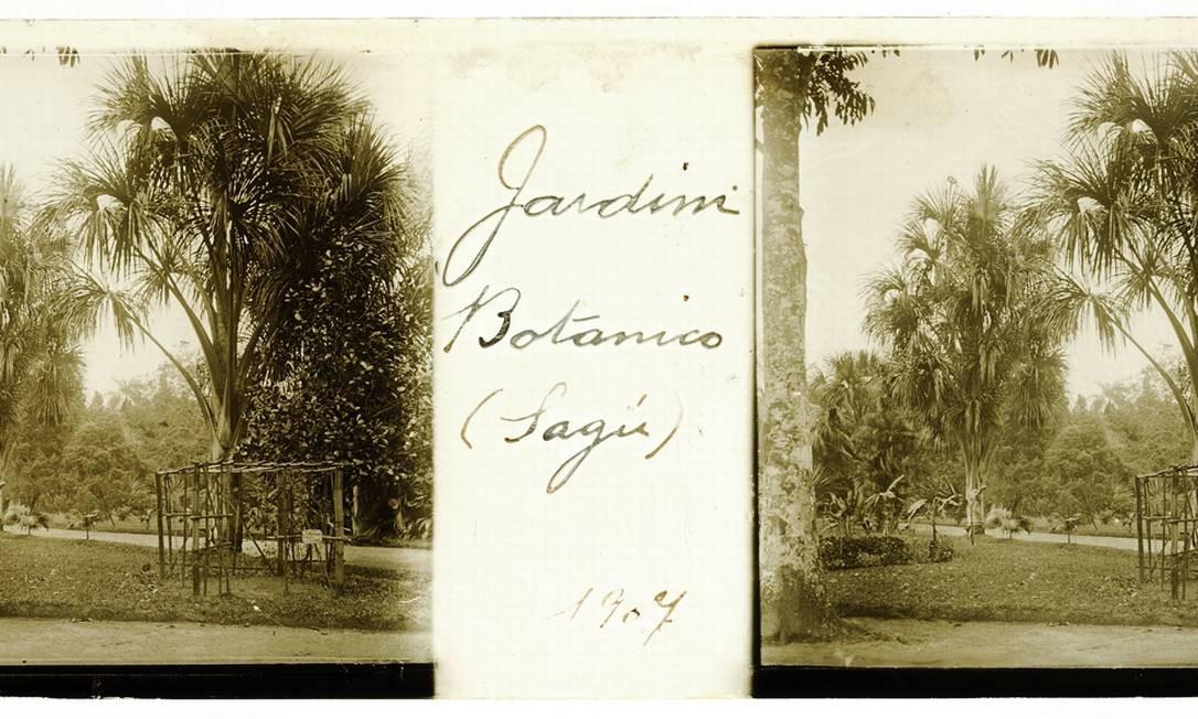 Alameda de palmeiras no Jardim Botânico do Rio de Janeiro. 1907 Foto: Acervo do Museu Imperial
