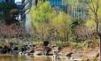 O paisagismo japonês próximo ao Tokyo Midtown