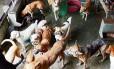 Alguns cães na Suipa, que abriga ainda gatos e até cavalos