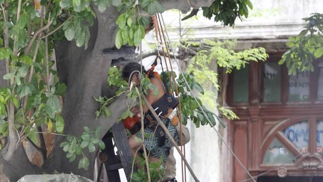 Índio é retirado da árvore por bombeiros Foto: Márcia Foletto / O Globo