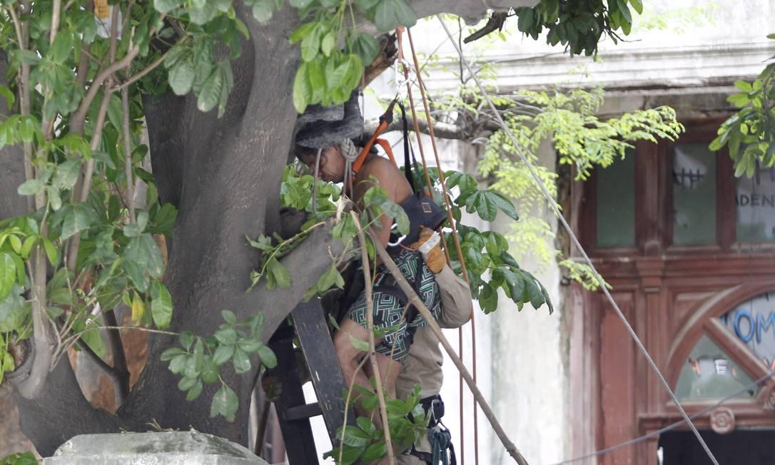 Índio desce da árvore acompanhado por bombeiros Márcia Foletto / Agência O Globo