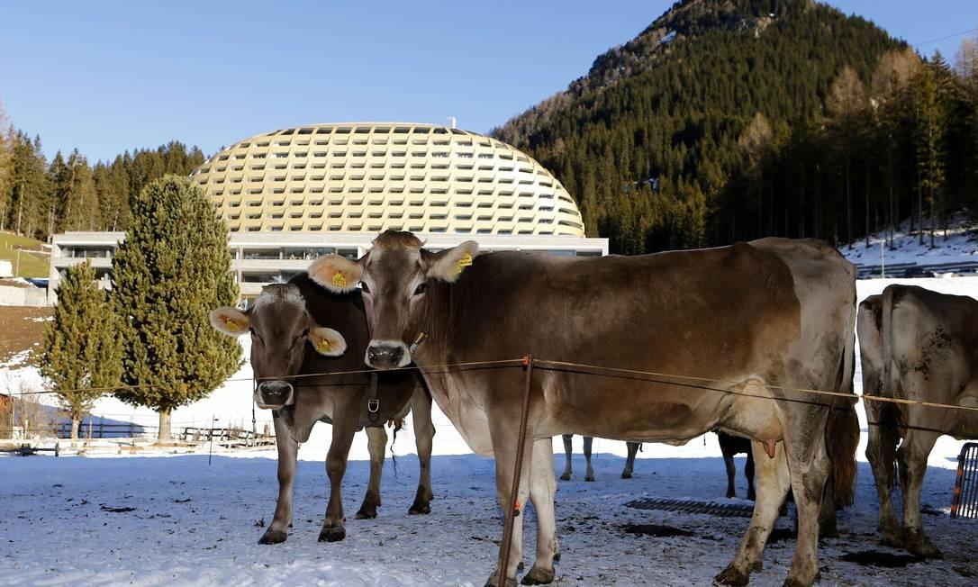 Vacas alpinas na frente do novo InterContinental em Davos, nos Alpes Foto: ARND WIEGMANN / REUTERS
