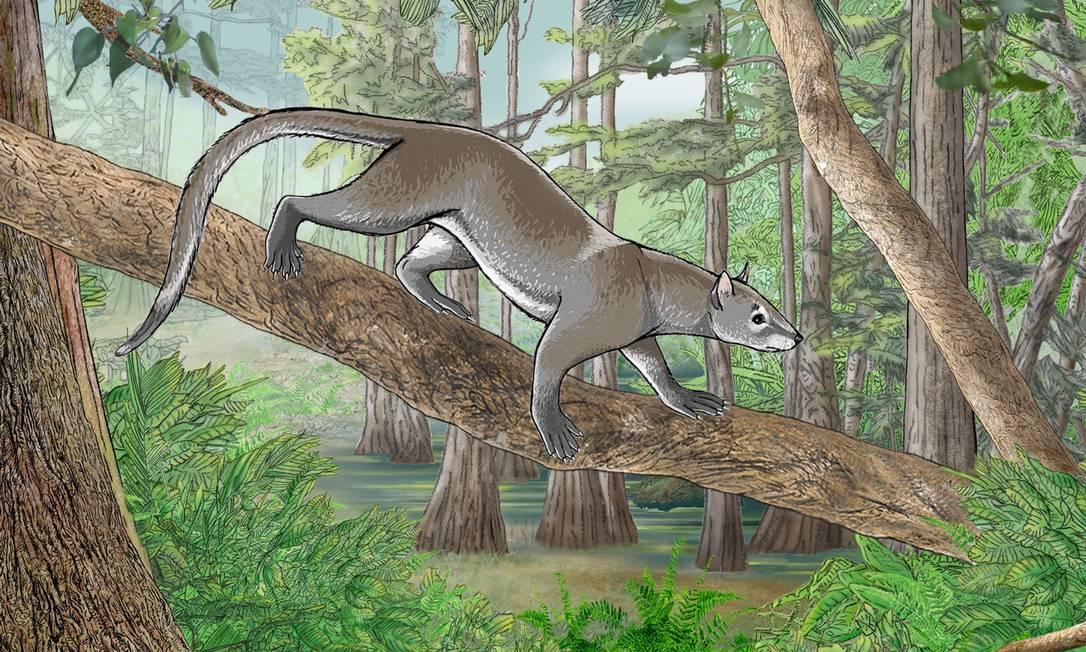 Imagem da espécie que viviam em árvores há 55 milhões de ano Foto: Charlène Letenneur (MNHN) e Pascale Golinvaux (RBINS)