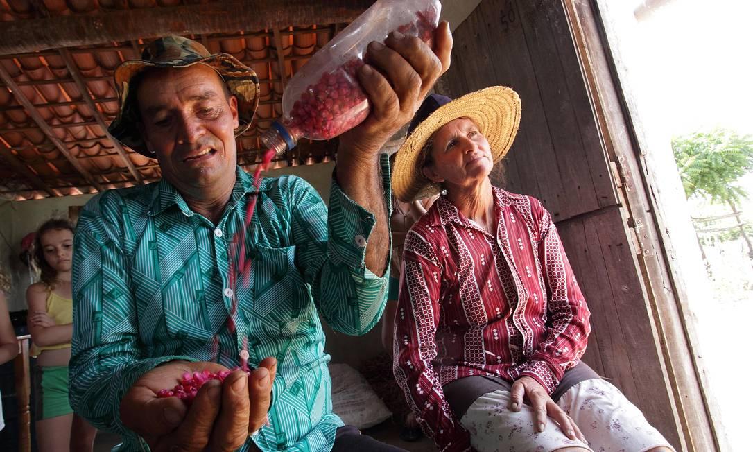 João Fernandes Nogueira exibe sementes híbridas envoltas em defensivos cor de rosa Foto: Hans von Manteuffel