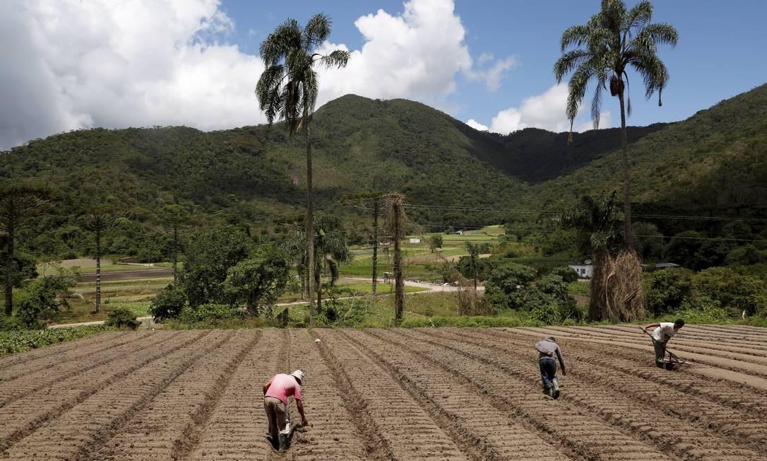 Agricultores, moradores do Brejal, aram a terra para plantações. Foto: Hudson Pontes
