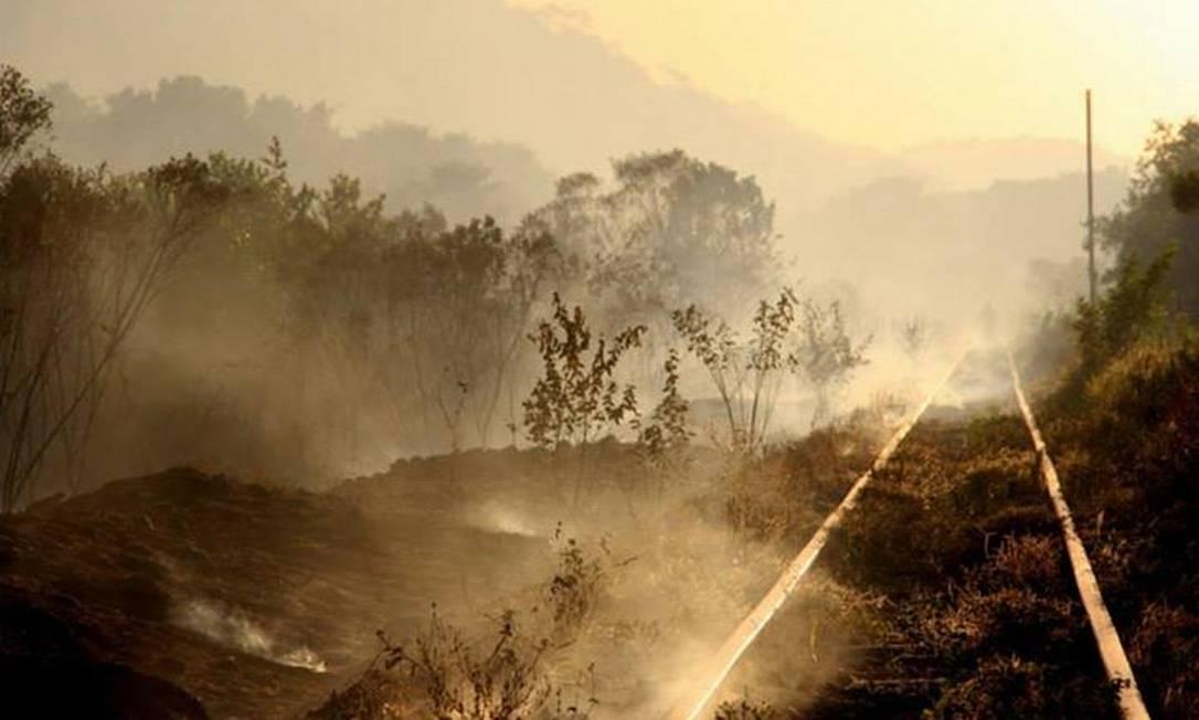 Fogo atinge Poço das Antas Foto: Associação Mico Leão Dourado / Divulgação