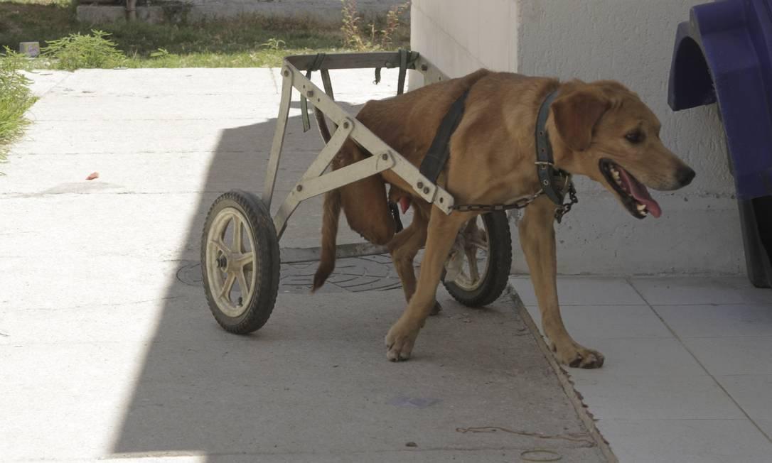 Cuidados. Suipa abriga mais de três mil cães Foto: Freelancer / Bia Guedes